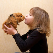 The little girl kissing the guinea pig. — Stock Photo