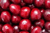 Fresh sweet cherries. Food fruit background — Stock Photo