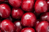 Macro. cerezas frescas. — Foto de Stock