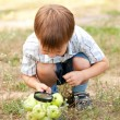 Stock Photo: Boy looking at apples with magnifying glass.