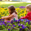 Stock Photo: Boy and girl picking flowers for mother.