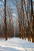 Winter forest on sunny day. — Stock Photo