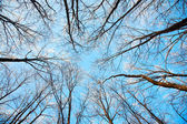 Treetops in the winter sunny forest — Stock Photo