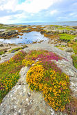 Irish landscape — Stock Photo