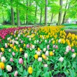 Garden of tulips — Stock Photo #19714393
