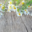 Daisy on  vintage wood planks — Stock Photo