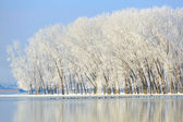 Winter trees covered with frost — Stock Photo