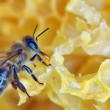 Stock Photo: Bee on honeycomb