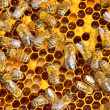 Stock Photo: Working bees on honey cells