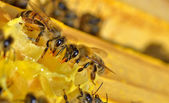 Plus d'abeilles sur une cellules de miel — Photo