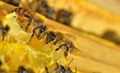 Weitere bienen auf einer honig-zellen — Stockfoto