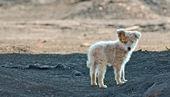 Slum-hund — Stockfoto