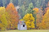 Colors of autumn birch forest — Stock Photo