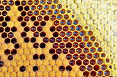 Honey in honeycomb closeup — Foto Stock