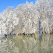 Стоковое фото: Winter trees covered with frost