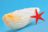 Seashell and starfish — Stock Photo