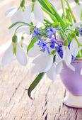 Snowdrops in a vase — Stock Photo
