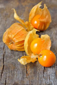 Physalis fruit — Stock Photo