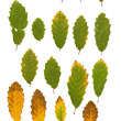 Stock Photo: Ash leaves green and yellow