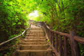 Stairway to forest, Erawan national park,Kanchanburi,Thailand — Stock Photo