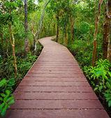 Path to the jungle,Trang,Thailand — Stock Photo