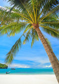 Beach and Coconut palm, Angthong national park island,Thailand — Foto de Stock