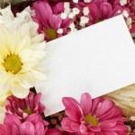 Chrysanthemum rose bouquet border — Stock Photo