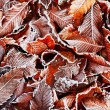 Royalty-Free Stock Photo: Frosty leaves background