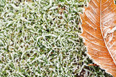 Frosty grass and leaves background — Stock Photo
