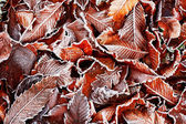Frosty leaves background — Stock Photo