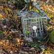 Stock Photo: Small mammal trap
