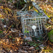 Small mammal trap — Stock Photo #22258247