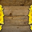 Spring daffodils border or frame background — Stock Photo #26491555