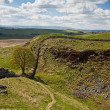 Sycamore Gap on Hadrian's Wall — Stock Photo