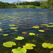 Stock Photo: Loughrigg Tarn