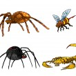Stock Photo: Collection of poisonous insects. Tarantula, black widow, scorpio