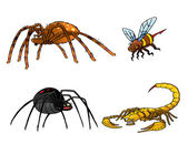 Collection of poisonous insects. Tarantula, black widow, scorpio — Stock Photo