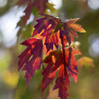 Fall colors — Stock fotografie