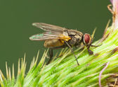 Fly in flower — Stock Photo