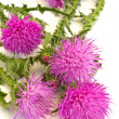 Burdock — Stock Photo