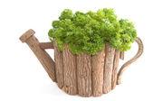 Fresh parsley, organic parsley in wooden pot — Stock Photo