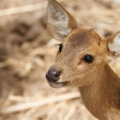 Deer portrait — Stock Photo #24979315