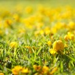 Yellow flower on green grass — Stock Photo