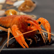 Stock Photo: Alive crayfish