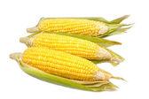 Fresh organic corn — Stock Photo