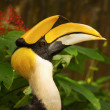 Closeup Wreathed Hornbill — Stock Photo #30651201