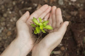 Hand holding a fresh young plant.saving new life (selective focu — Stock Photo