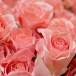 Pink roses background — Stock Photo #36436311