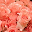 Pink roses background — Stock Photo #36436427