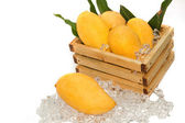 Fresh golden mango ,thai fruit dessert — Stock Photo